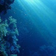 μόλυνση κοράλλια