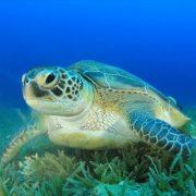 καθαρισμός παραλίας έφερε πίσω τις χελώνες