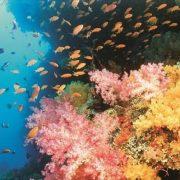 απειλή για τους κοραλλιογενείς υφάλους