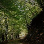 χαλκιδική οικοσυστήματα κλιματική αλλαγή